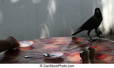 crow picks up piece of fruit from saucer on round table -...