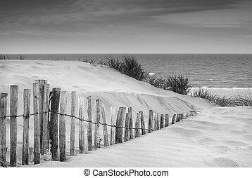 Grassy sand dunes landscape at sunrise in black and white