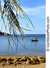 phangan thailand beach rocks pirogue palm - asia in kho...
