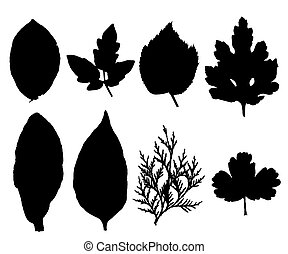 ??ollection of silhouettes of leaves isolated on white