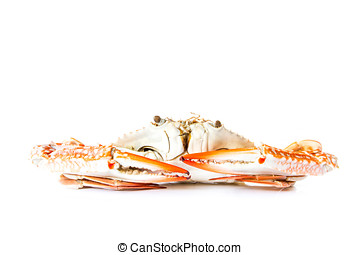 crab isolated on white background - serrated mud crab - crab...