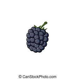 Fruit - Blackberry - A freehand vector of a blackberry