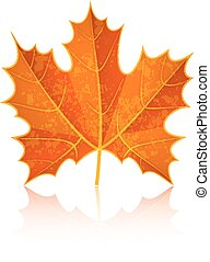 Autumn dry maple leaf Eps10 vector illustration Isolated on...