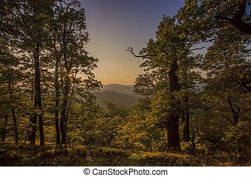 Forest in autumn colors thuringian nature Germany