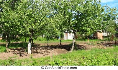 garden with apple trees