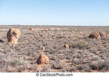 karoo, formigueiros, paisagem