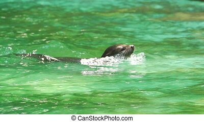 seal - swimming and diving in slow motion