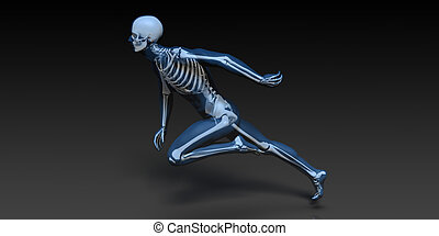 Medical Illustration of Human Body and Bones