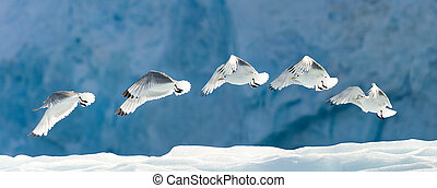 Seagull Flying Over Snow - Seagull flying over snow...