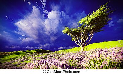 Lavender fields with a solitary tree