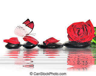 Butterfly, rose, petals and black  stones in the water.