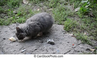 hungry stray kitten eats bread - a hungry stray kitten eats...