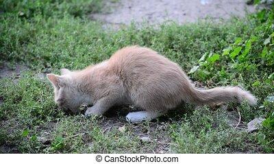 hungry stray kitten eats bread