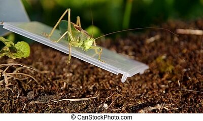 Green grasshopper on a plastic box