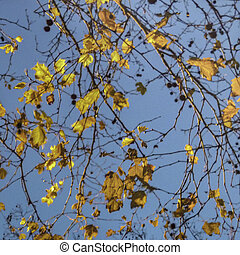 Leaves Branches and Sky Autumn Scene