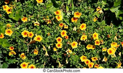 Flower bed of orange flowers in the wind
