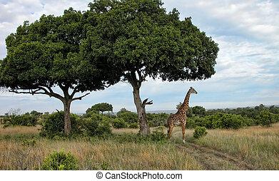 Detail of Kenya, Africa during Spring 2005