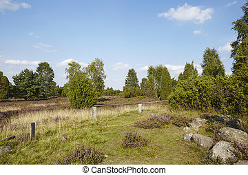 Luneburg Heath - Heathland - The heathland landscape of the...
