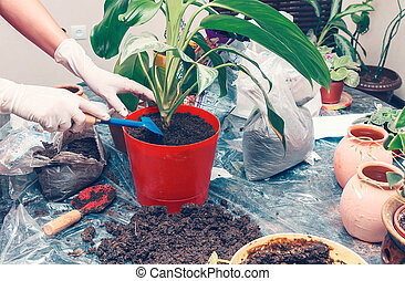 Home gardening - Woman working with house plant using shovel