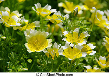 poached egg plant 09