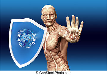 Man with a shield (anatomical vision) are protected from...