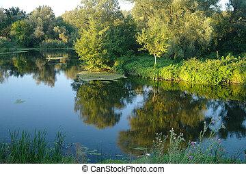 foresta, composizione, fiume, natura