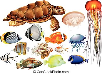 Different kind of sea animals illustration