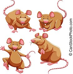 Brown rat in different poses