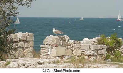 Seagull sits on a stone wall