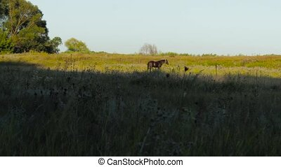 grazing horse at sunset