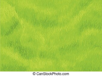 grass background green meadow in a park