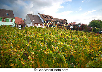 hillside vineyard - vineyard on a hill with houses on top