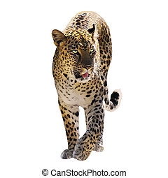 Digital Painting Of Leopard Isolated on White Background