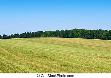 Mowed green grass field with forest behind