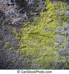 Grey rock covered by yellow lichen