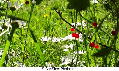 Summer berries and flowers - Summer garden berries and...