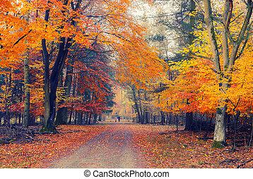 Foggy autumn park - Pathway in the foggy autumn park