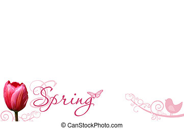 single tulip and wording spring