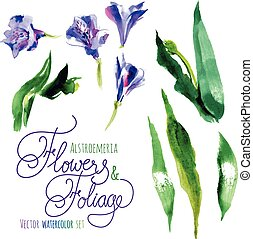 Watercolor flowers - Vector set of watercolor flowers and...