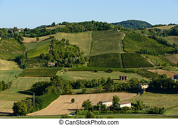 Piacenza Vineyards - In the picture a beautiful view of the...