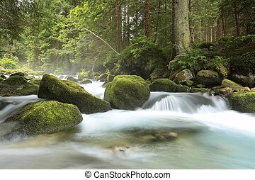 Forest stream flowing from the mountains