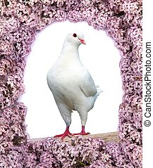 Beautiful view of one white pigeon on perch with flowering...