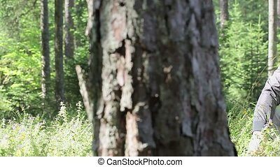 Forest worker in forest