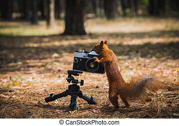 film, fényképezőgép, mókus, piros