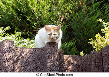 Domestic cat in nature