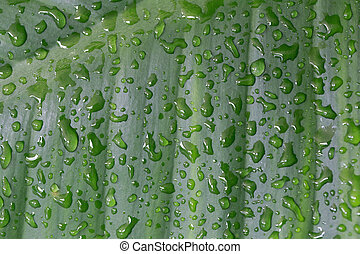 Water droplets on a green leaf.