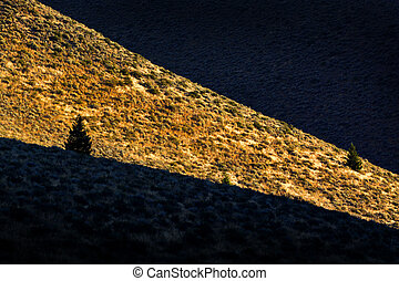 Canyon Tree Sunlight and Shadow Pine Trees - Shadow in a...