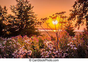 Sunrise over a meadow with many flowers