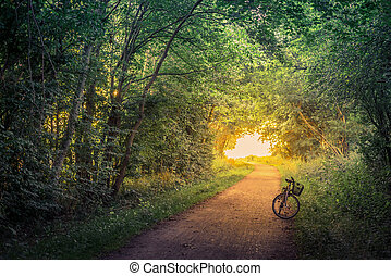 Bike on a forest trail in the morning