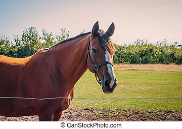 Brown horse on a field
